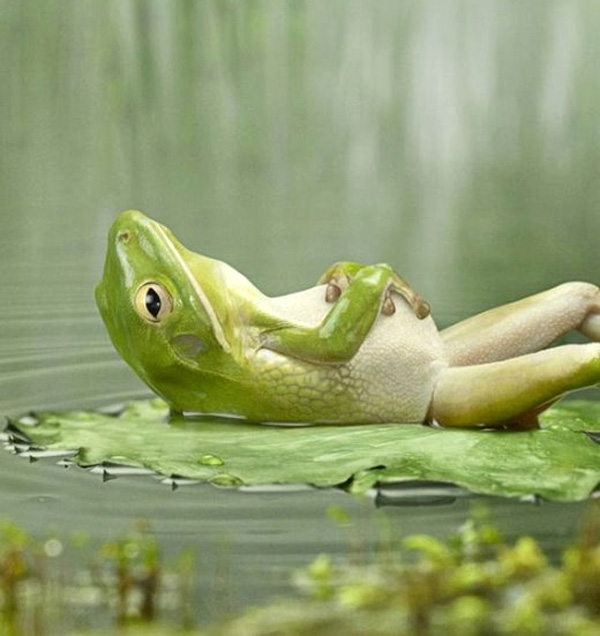 frog_lying_on_lily_back1
